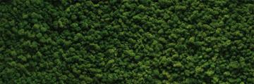 7203 Irisch Moos