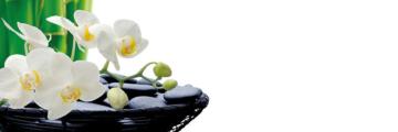8102 Orchidee 2